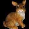Заяц попрыгун